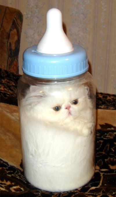 pisica imbuteliata poze haioase animale www maxfun ro